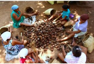 Plant Extractivism in Brazil
